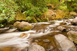 Maui stream
